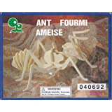 """Abc Products"""" 3 D ~ Insect Assembling Skeleton Kit (Ant Model Helps Kids Develop Coordination And Problem Solving..."""