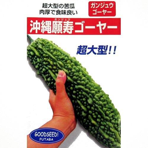 ゴーヤ 種 【 沖縄願寿ゴーヤー 】 種子 小袋(約10ml)