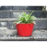 The Garden Store Oval Tin Pot - Red