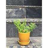 The Garden Store Ceramic Glazed Pot Small -yellow