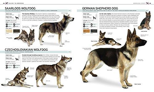 Top 20 Best Dog Training Books