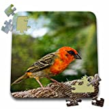 Danita Delimont - Birds - Colorful Bird on Fregate Island, Seychelles, Africa-AF39 AWR0116 - Alison Wright - 10x10 Inch Puzzle (pzl_70536_2)