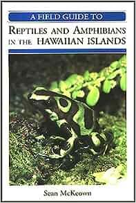 Lizards as pets: