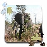 Angelique Cajam Safari Elephants - South African Elephants eating leaves - 10x10 Inch Puzzle (pzl_20103_2)