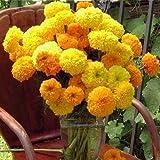Flora Fields Marigold - Carnation Flower Cracker Jack Mix
