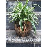 The Garden Store Ceramic Glazed Pot -Copper