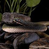 FUNLAVIE®Rubber Lifelike Snakes Scary Gag Gift Funny Prank Joke Toy Kid Child-1 Pc