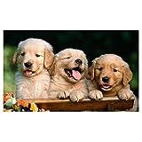 Cute Dogs Vinyl Home Decor PVC Wall Sticker ( 91 Cms X 61 Cms)