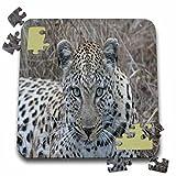 Angelique Cajam Big Cat Safari - South African Female Leopard Face - 10x10 Inch Puzzle (pzl_20104_2)