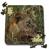 Angelique Cajam Big Cat Safari - Female lion in the grass - 10x10 Inch Puzzle (pzl_26822_2)