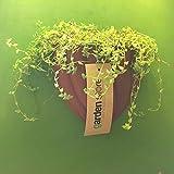 The Garden Store Wall Planter - B00WO919NM