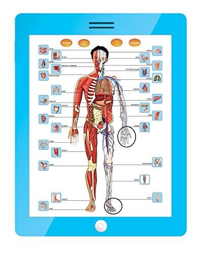 Mitashi SkyKidz Anatomy Learning Pad
