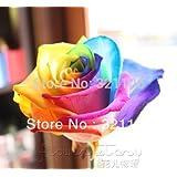 Rainbow Rose ,Black Rose ,Blue Rose Etc. 9 Colors DIY Home Gardening Balcony & Yard Fragrant Flower Plant Bonsai...