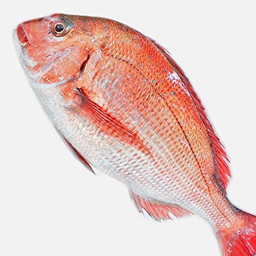 魚水島 天然真鯛 マダイ 桜鯛 日本海産 1.5?1.9キロ物