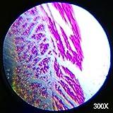 AmScope M30-ABS-KT1-W 300X-600X-1200X 48Pc Metal Arm Educational Kids Biological Microscope Kit