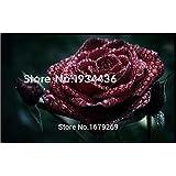 20+PCS True Blood Black Rose Rare Rose Seeds Flowers Seeds, Garden Bonsai Planting,Semillas De Rosa BLACK ROSE,