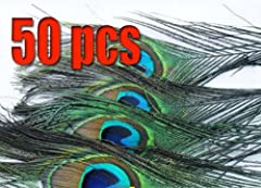 Pack of 50pc High Quality Real Natural Peacock Feathers 10-12