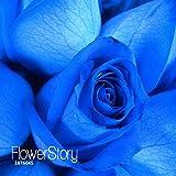 Big Sale!Blue Rose Fragrant Gardens Flowering Plants Strong, Blue Dragon Rose, Blue Rose Seeds 150 PCS/Pack,#2AQBTP