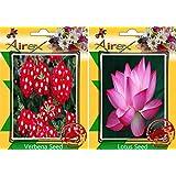Airex Verbena And Lotus Flower Seeds ( Pack Of 30 Seeds Per Packet)