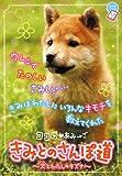 ココロ・あみ→ご きみとのさんぽ道—犬とわたしのキズナ (ちゃおノベルズ)