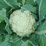 Seedzz Cauliflower Seeds (avg Seeds 40 To 50 In One Pack) - Pack Of 2