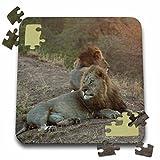 Angelique Cajam Big Cat Safari - Lion king on a rode - 10x10 Inch Puzzle (pzl_26824_2)