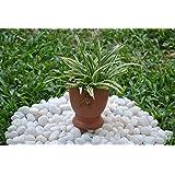 The Garden Store Cup Planter
