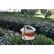 Plant Care Hanging Glass Flower Planter Vase Home Garden Ball Decor