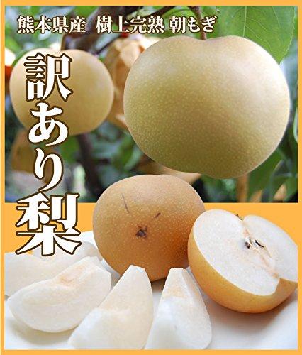 熊本県産 訳あり梨 朝もぎ樹上完熟約2.5kg入り
