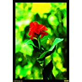 Red And Green 02 Canvas Medium ( 32 In X 46 In )