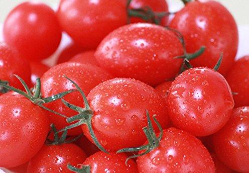 濃厚フルーツミニトマト【甘っこ】 (1kg箱入り) 【驚異のリピート率約90%】