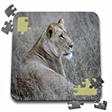 Angelique Cajam Big Cat Safari - South African Lioness laying in the grass - 10x10 Inch Puzzle (pzl_20106_2)