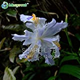 Japanese Iris Japonica Flowers Seeds White Iris Orchid Seeds Japanese Rare Flower Easy To Plant. Garden Home Bonsai...