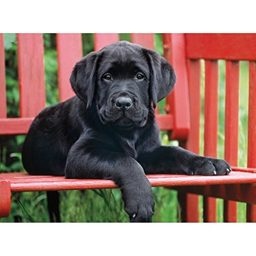 Clementoni The Black Dog Puzzle (500-Piece)