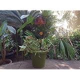 The Garden Store Metal Stick-pumpkin Without Pot
