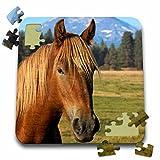 Danita Delimont - Horses - Oregon, Three Sisters, Cascade Range, horse - US38 LEN0017 - Lisa S. Engelbrecht - 10x10 Inch Puzzle (pzl_93881_2)