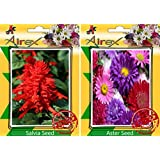 Airex Salvia And Aster Flower Seeds ( Pack Of 30 Seeds Per Packet)