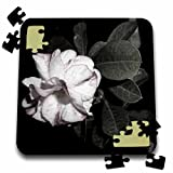 WhiteOaks Photography and Artwork - Rose - Touch of Color Desert Rose a photo drained of color except for a touch - 10x10 Inch Puzzle (pzl_211950_2)