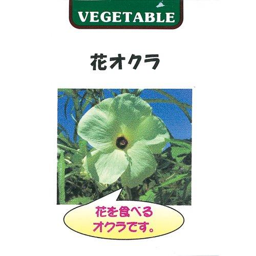 オクラ 種 花オクラ 小袋(約0.5ml(約20粒))