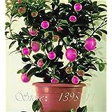 20 Pcs Rare Rainbow Lemon Seeds Organic Fruit Lemon Tree Seeds Home Garden Fruit Plant .ful Bonsai Lemon Seeds...