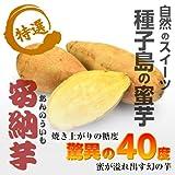 【おいもファン必至 】鹿児島県産 種子島 安納芋 1kg箱