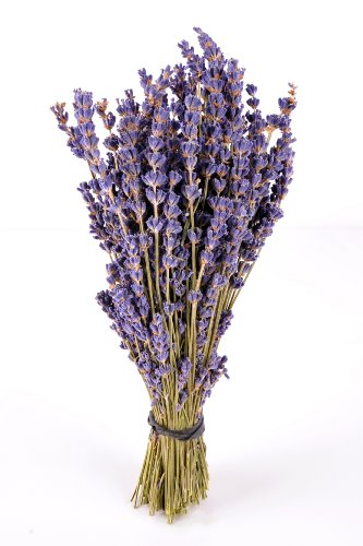 "8"" Dried Royal Velvet Field Cut Lavender Bunches"