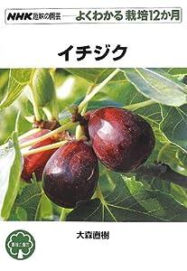 イチジク (NHK趣味の園芸 よくわかる栽培12か月 )
