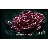 100PCS True Blood Black Rose Rare Rose Seeds Flowers Seeds, Garden Bonsai Planting,Semillas De Rosa BLACK ROSE,