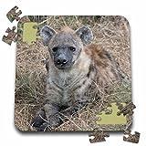 Angelique Cajam Safari Animals - South African Hyena front view - 10x10 Inch Puzzle (pzl_20114_2)