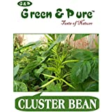 Green & Pure - High Yield Organic Vegetable Seeds - Cluster Bean - Pack Of 3 For Kitchen / Terrace / Home Garden