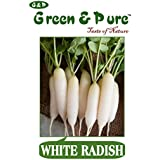 Green & Pure - High Yield Organic Vegetable Seeds - Radish (White) - Pack Of 3 For Kitchen / Terrace / Home Garden