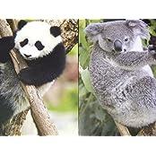 Staples Two Pocket Paper Folder ~ Set Of 2 Animal Folders (Panda Hanging Out, Koala Climbing Tree)