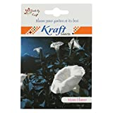 Moonflower Seeds (Pack Of 20, White) By Kraft Seeds