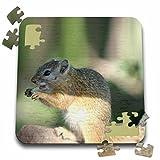 Angelique Cajams Safari Animals - South African Squirrel side view - 10x10 Inch Puzzle (pzl_26819_2)